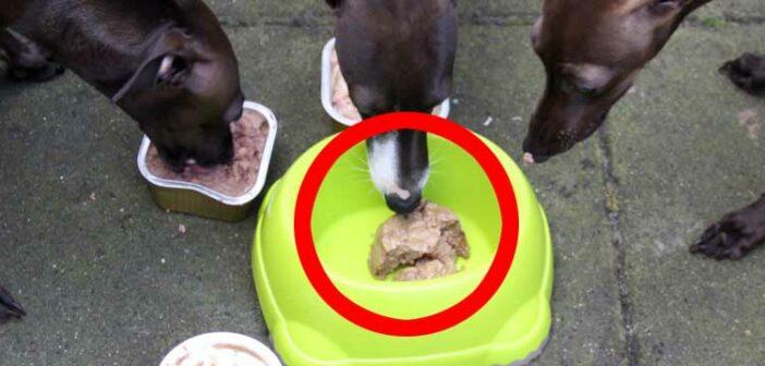 Plastik im Hundefutter – das jüngste Gerücht?