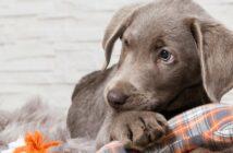 Hundesteuer: Warum gibt es sie?