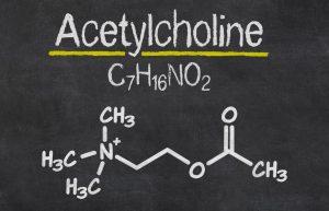 Bei der Milchsäuregärung entstehen neben Acetylcholin auch Enzyme und Vitamine. (#3)