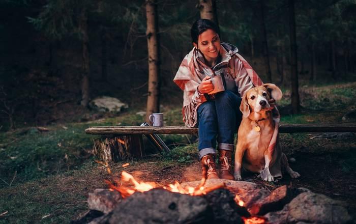 Campingplätze sind ebenfalls ein tolles Reiseziel mit dem Hund. (Foto: shutterstock - Soloviova Liudmyla)